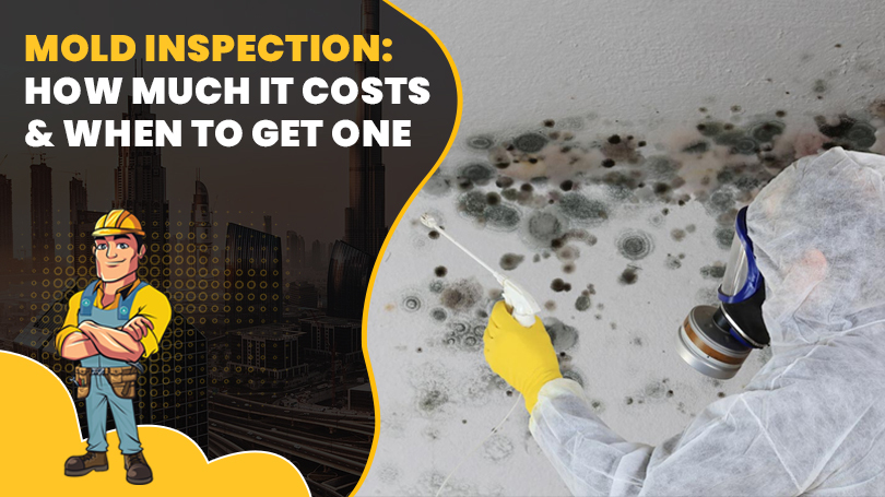 Mold Inspection: How Much It Costs and When to Get One